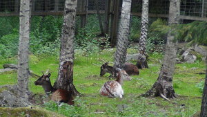 Зоопарк Ррануа