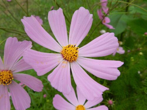 Комнатные растения - всё по домашнему цветоводству