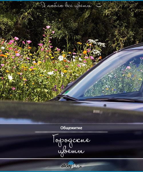 Я люблю все цветы, часть 19