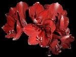 feli_btd_red flowers.png