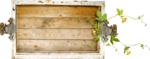Lilas_Old-Garden_elmt (58).png