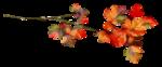 AutumnMelody_by GalinaV_el (39).png
