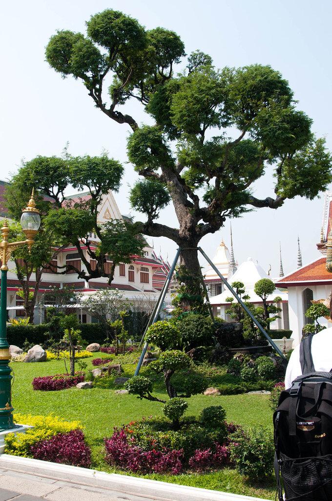 Храм утреней зари, дерево