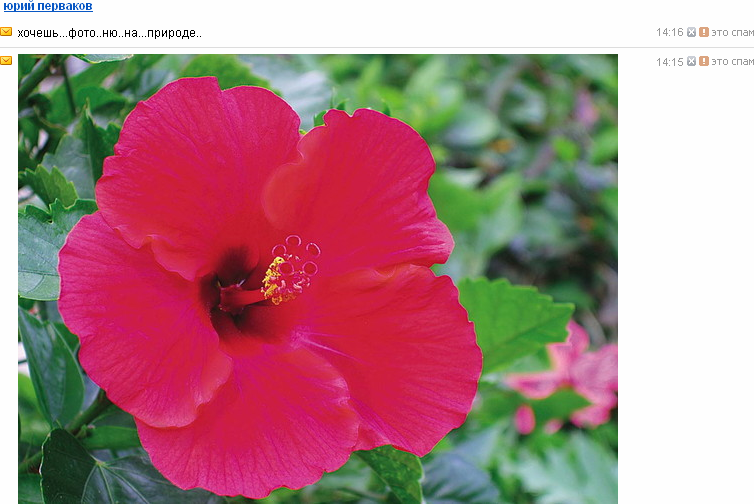 http://img-fotki.yandex.ru/get/6508/18026814.23/0_64dc1_d6f13a18_XL.jpg