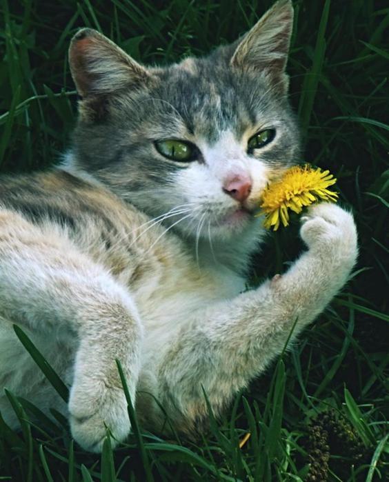 Кошки и притягательные ароматы цветов   красивые фотографии