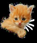 «Рыжий котенок» 0_8c6ab_228f92a5_S