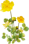 «Brigit_Flowery_Meadow» 0_8d495_bac76218_S