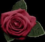 «Vintage Rose» 0_8f57f_eb05b852_S
