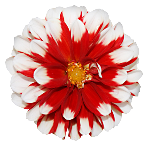 «Valentinas Creations_Patriotic Birthday»  0_8f7e6_22825162_L
