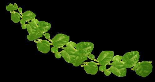 «Florjuscrap_Green_Madness»  0_8ff68_91c73306_L
