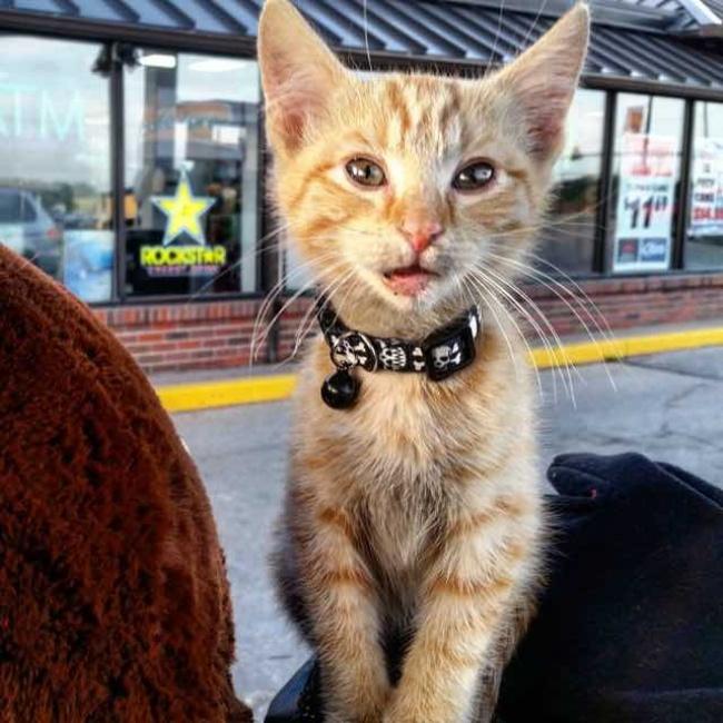 Байкер спас котенка иотправился путешествовать сним (10 фото)