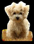 1366_-_dog_-_LB_TUBES.png