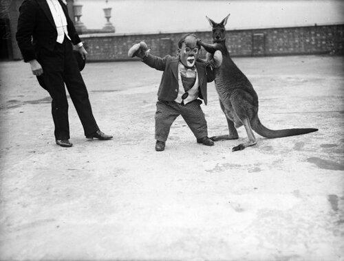 Цирковой карлик боксирует с кенгуру. 8 декабря 1932 г.