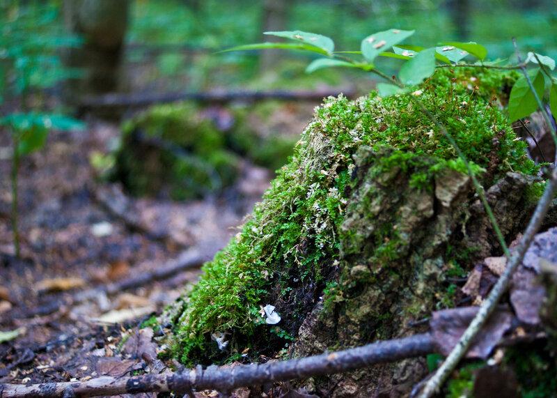 Лесные текстуры