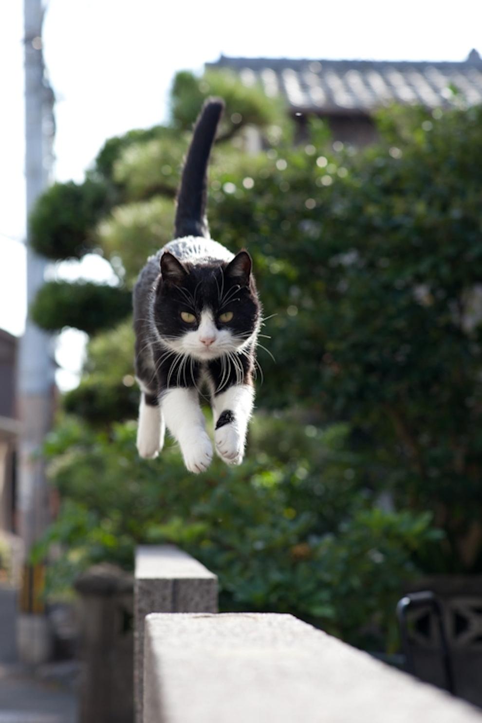 Фото 14 - Кошачий рай в Японии