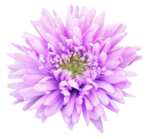 Цветочное ассорти 2