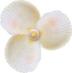 NLD Shell flower.png