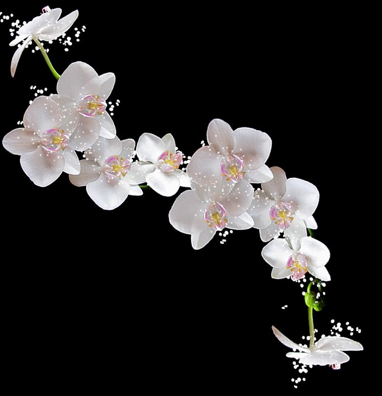 Веточки цветов картинки 8