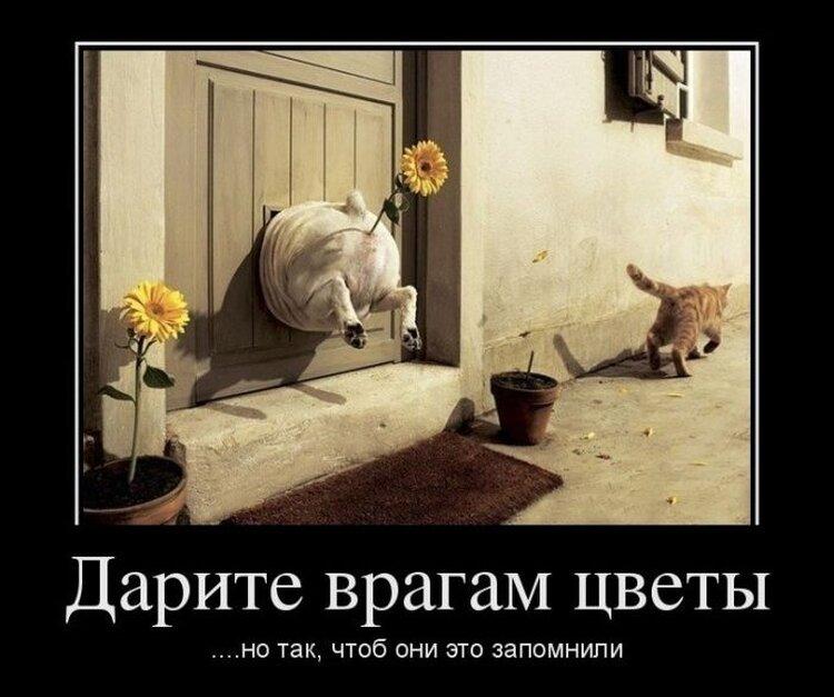 приколы пежня: