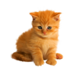 «Рыжий котенок» 0_8c6f9_5108b2aa_S