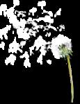 «Vanilla Dream» 0_8dda9_a179258f_S