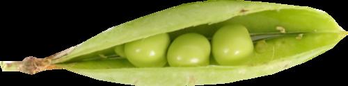 «Florjuscrap_Green_Madness»  0_8ff6c_7e68c502_L