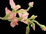 «Dreamin Pink» 0_99b0d_4439b5f6_S