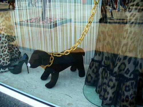 витринная собачка