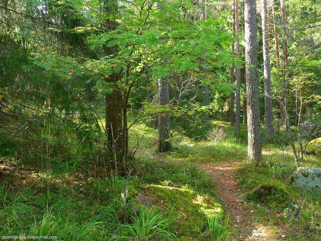 По лесной тропинке