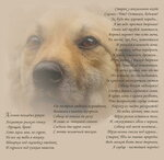 11. Стихи о рыжей дворняге  - Эдуард Асадов.jpg
