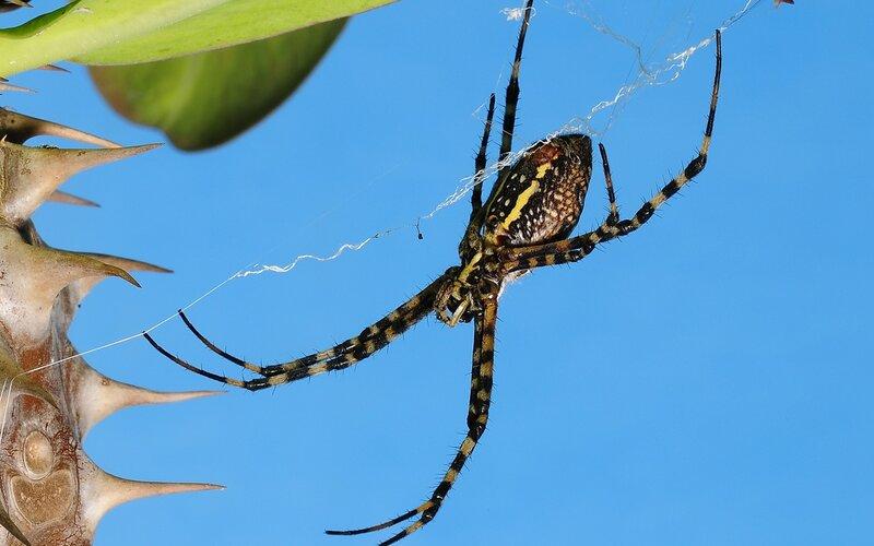 Паук плетёт свою паутину.
