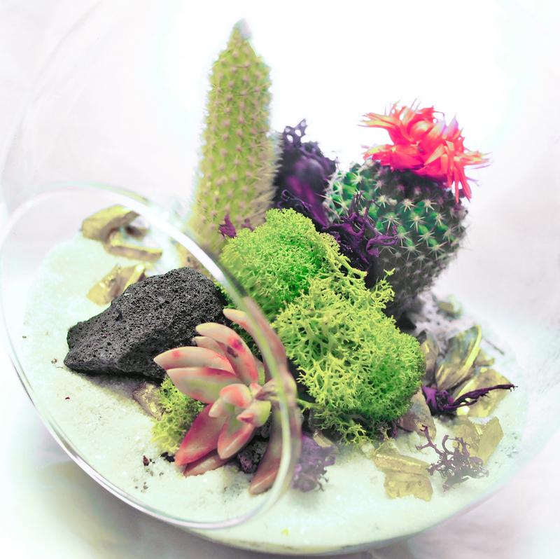 Обитание растений