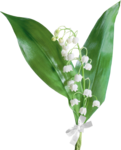 цветы (82).png