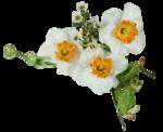 цветы (156).png