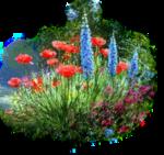 цветы (157).png