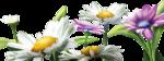 цветы (161).png