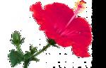 цветы (182).png
