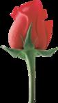 roza2 (20).png
