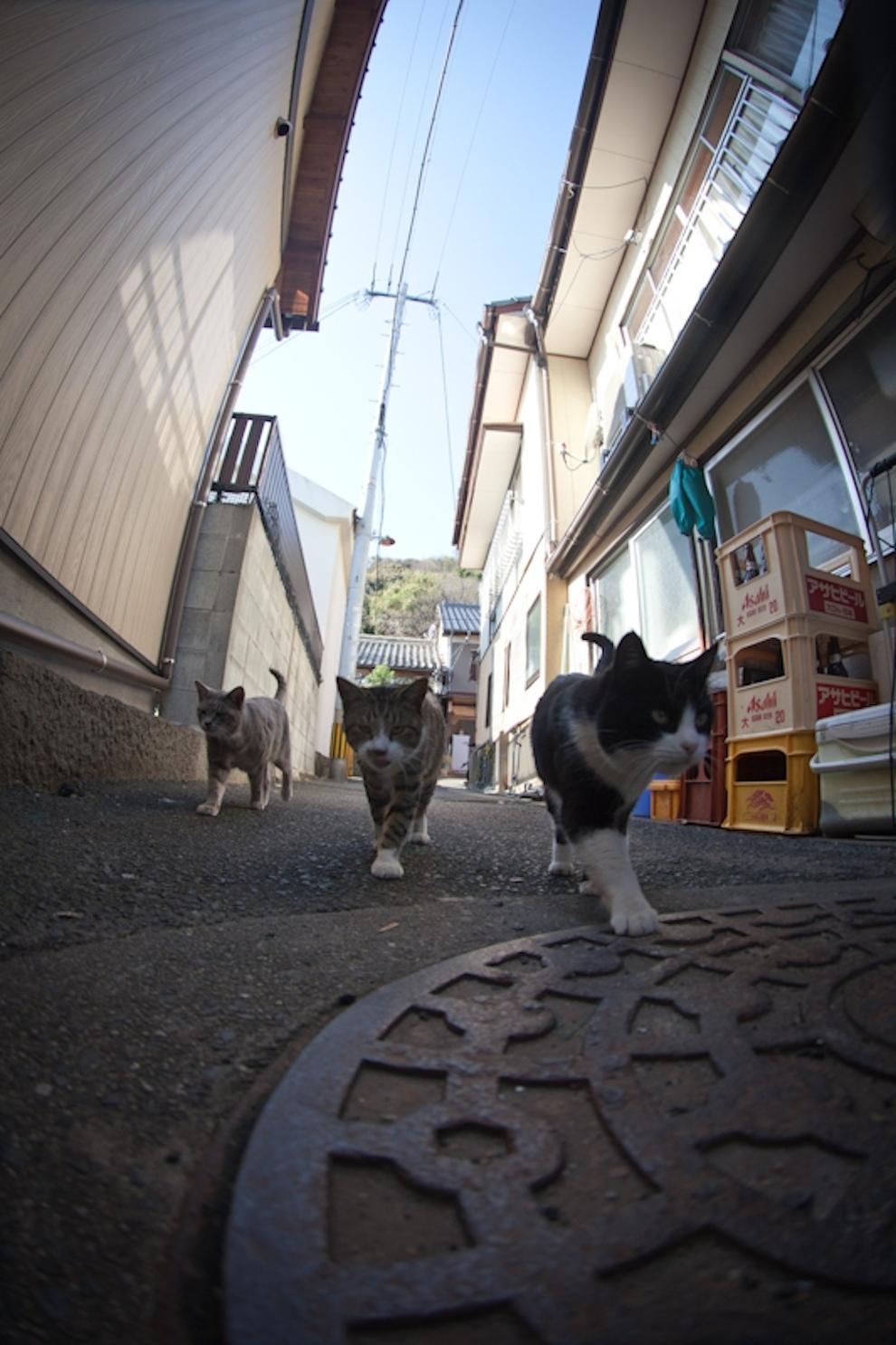Фото 16 - Кошачий рай в Японии
