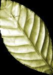 Lilas_Old-Garden_elmt (92).png