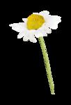 Palvinka_FlowerAdventure_flower3.png