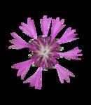 rena_clocktiming_element (20).png