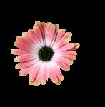 rena_clocktiming_element (23).png
