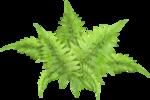 Forest_Scent_Zalinka_el (47).png