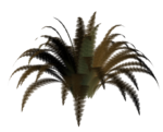 R11 - Nature Time 1 - Fern - 007.png