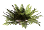 R11 - Nature Time 1 - Fern - 050.png