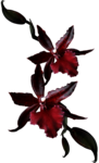 Lilas_btd_red flowers.png