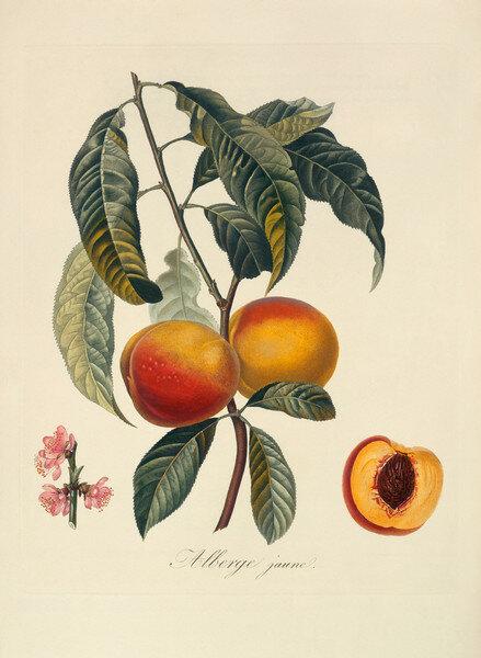 Ботаника (картинки для творчества). свой цитатник или сообщество!  Прочитать целикомВ.