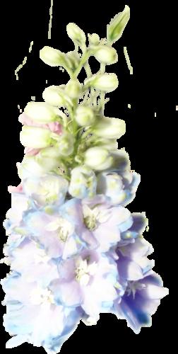 «Kimla_LavenderStory» 0_9020b_d14b69fd_L
