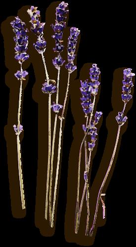 «Kimla_LavenderStory» 0_90258_77983609_L